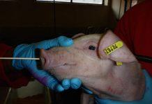 SWINE FLU MAP RI Farm
