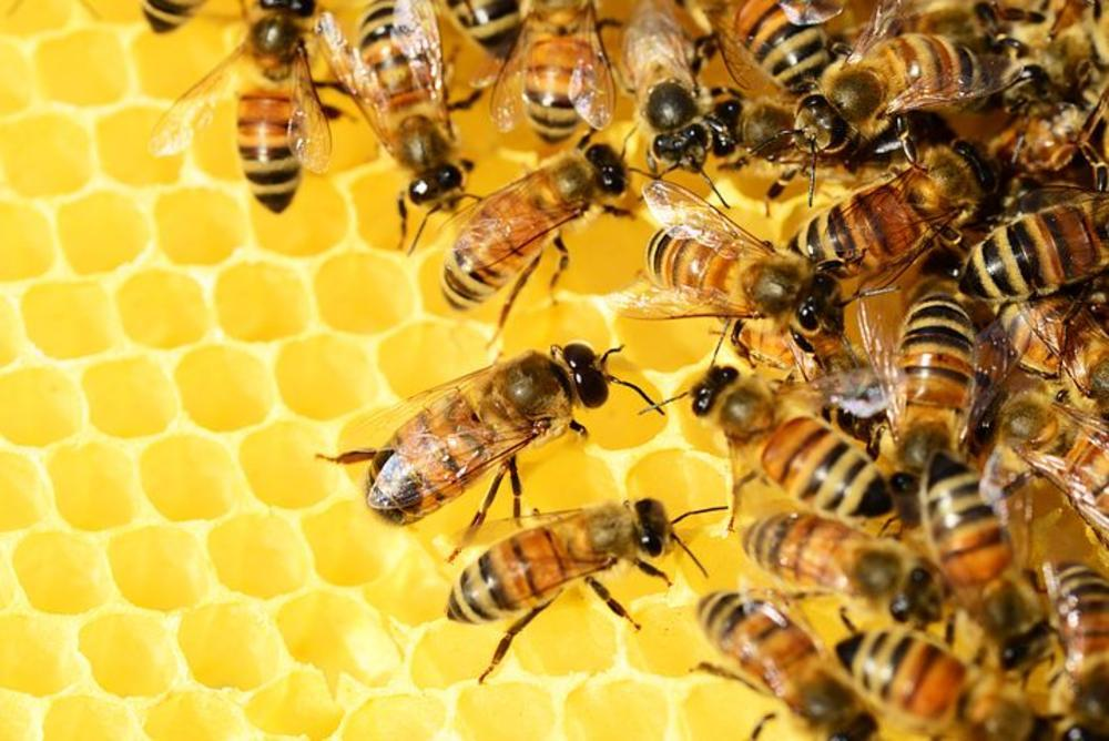 Beekeepers and honey producers stung by possible Euro threats
