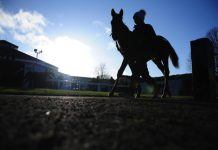 Tattersalls sale cancelled BR Farm
